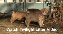 Twilight Litter Video